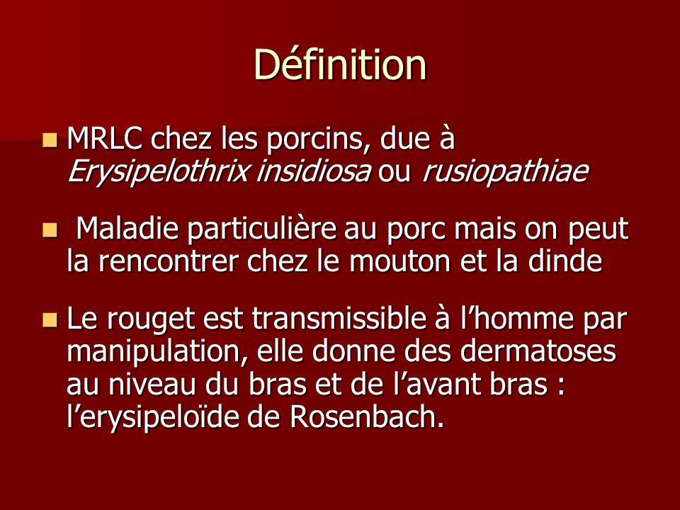 Définition MRLC chez les porcins, due à Erysipelothrix insidiosa ou rusiopathiae.