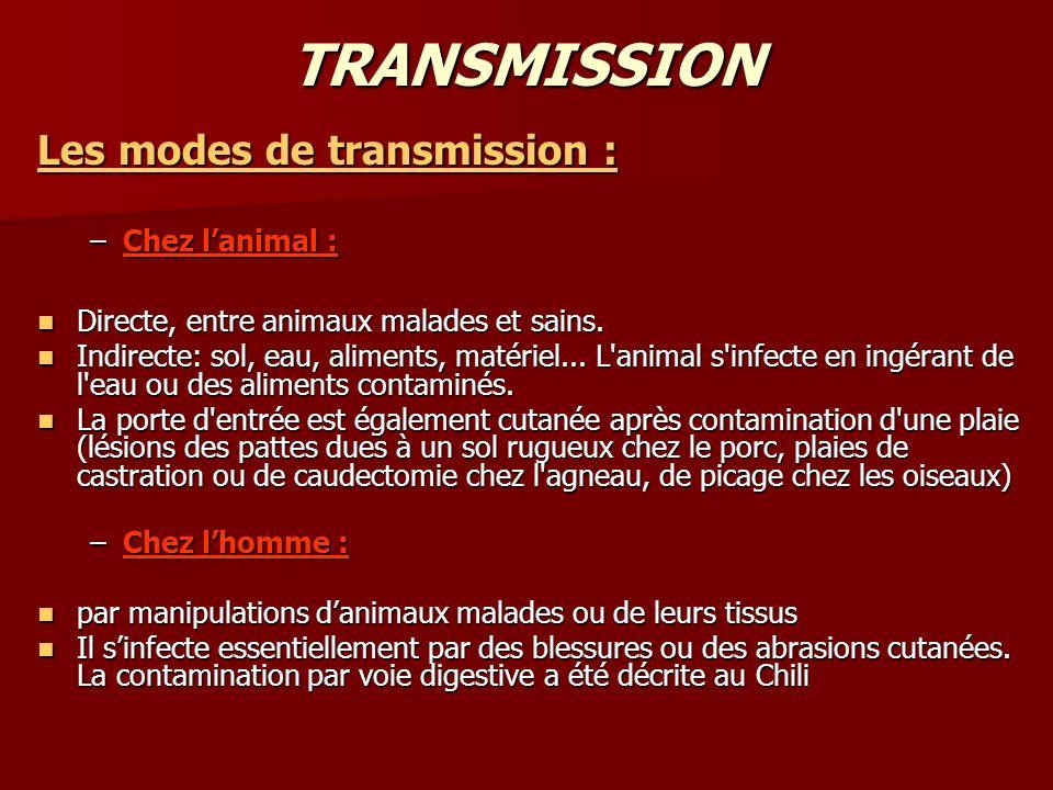TRANSMISSION Les modes de transmission : Chez l'animal :