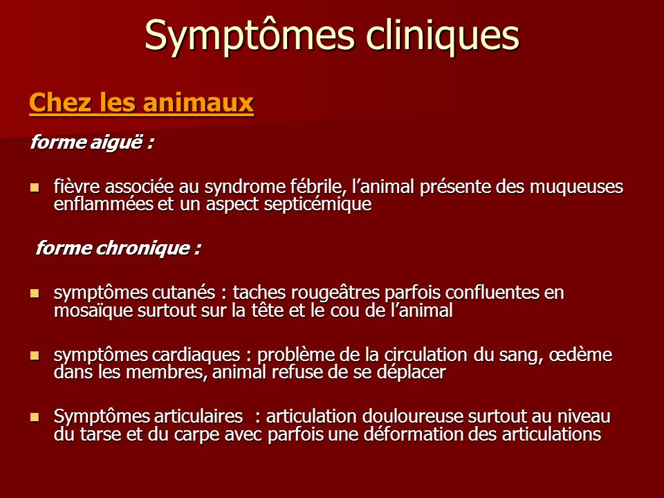 Symptômes cliniques Chez les animaux forme aiguë :