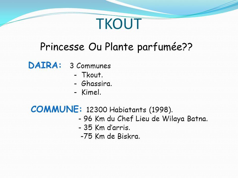 TKOUT Princesse Ou Plante parfumée DAIRA: 3 Communes