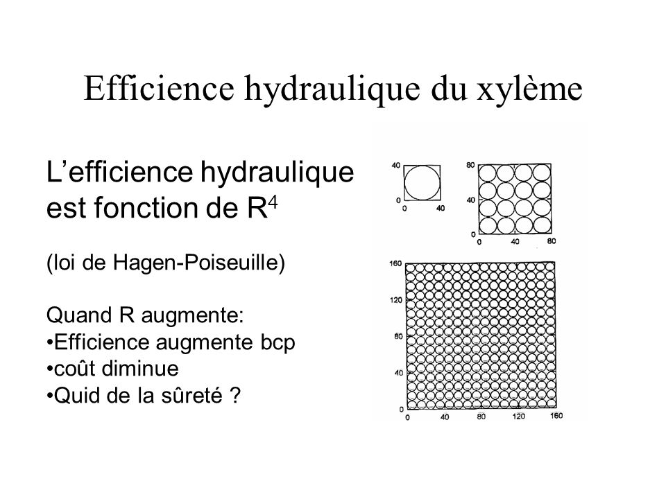 Efficience hydraulique du xylème