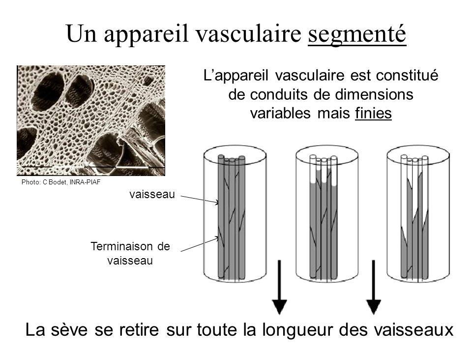 Un appareil vasculaire segmenté