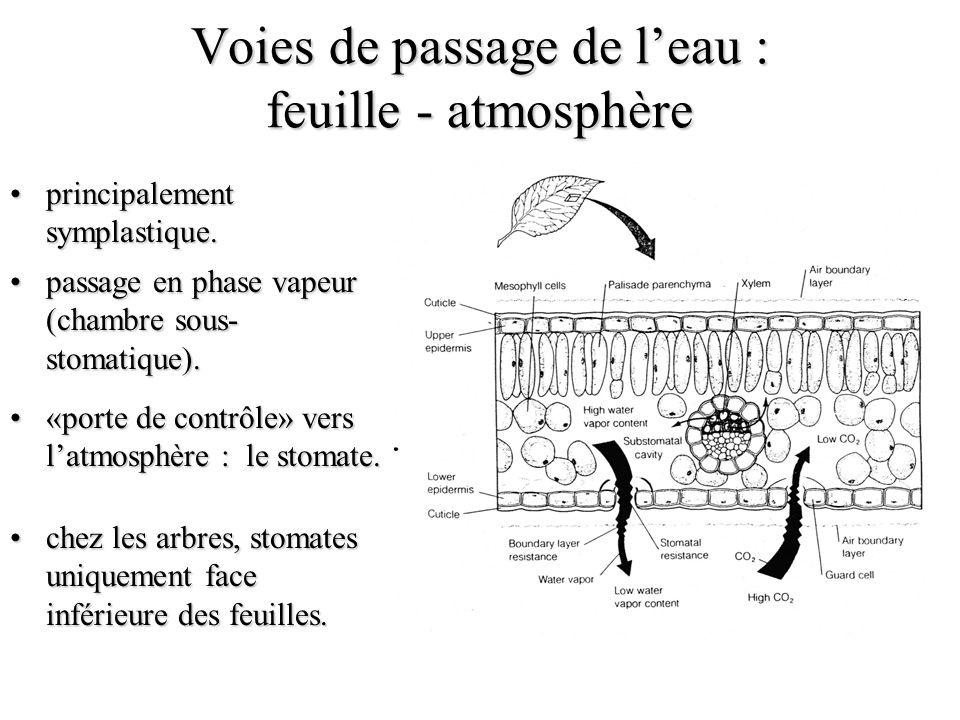 Voies de passage de l'eau : feuille - atmosphère