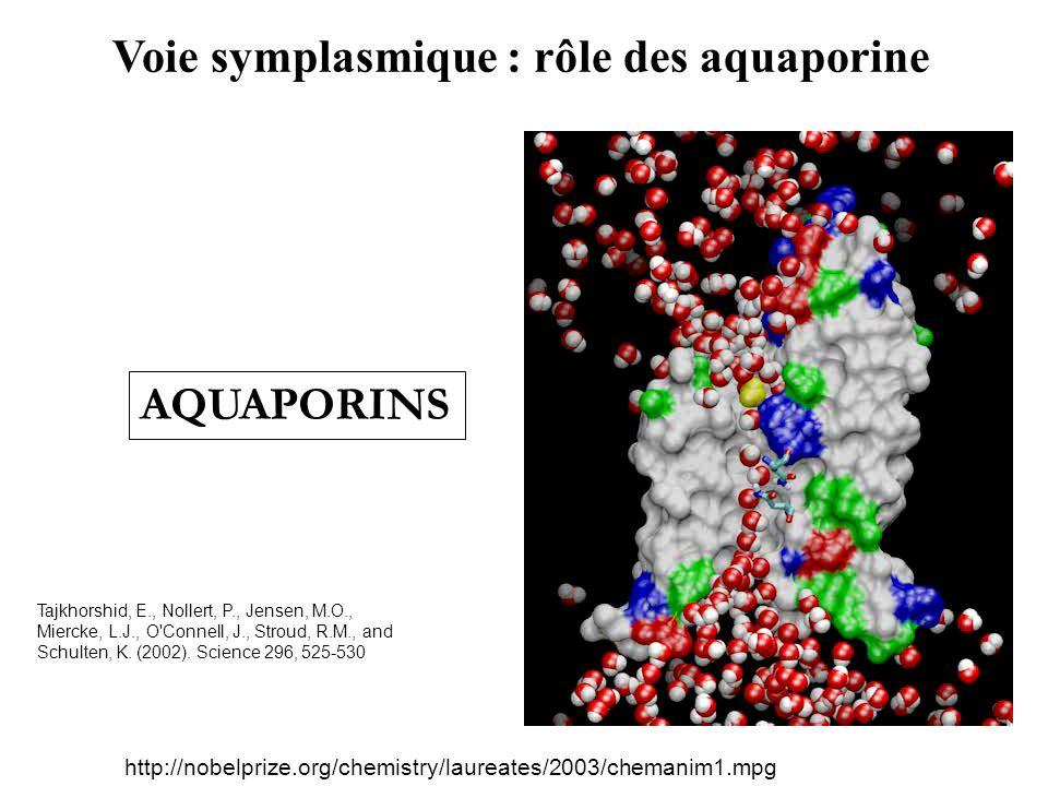 Voie symplasmique : rôle des aquaporine