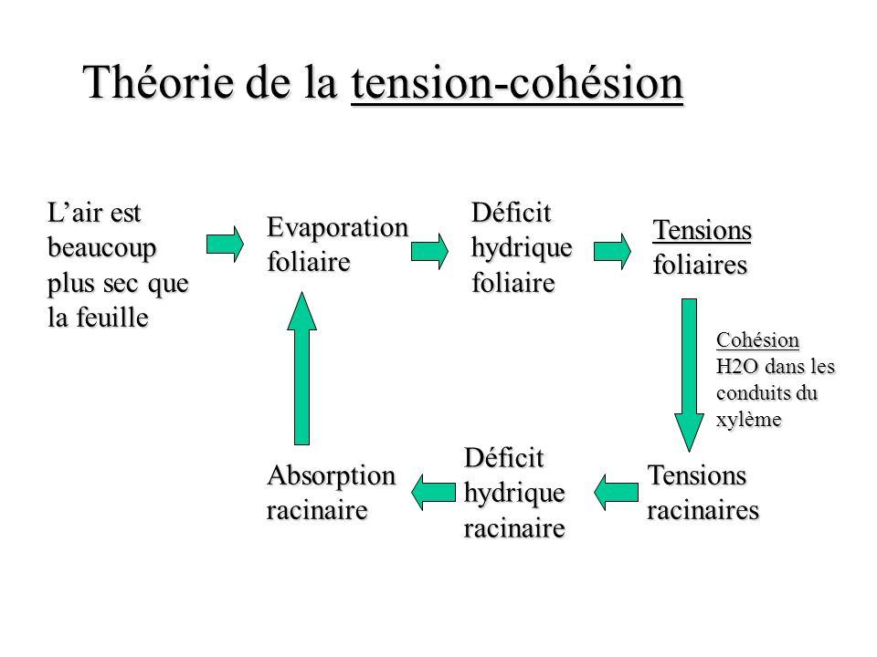 Théorie de la tension-cohésion