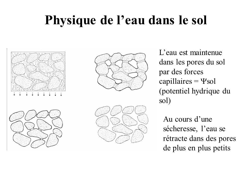 Physique de l'eau dans le sol