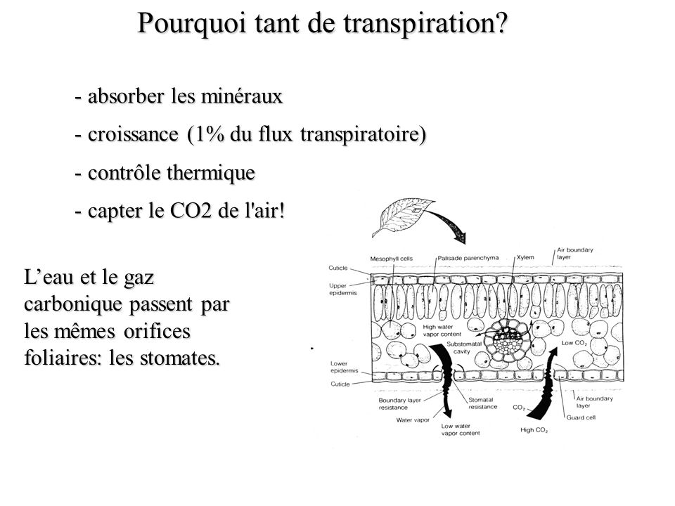 Pourquoi tant de transpiration
