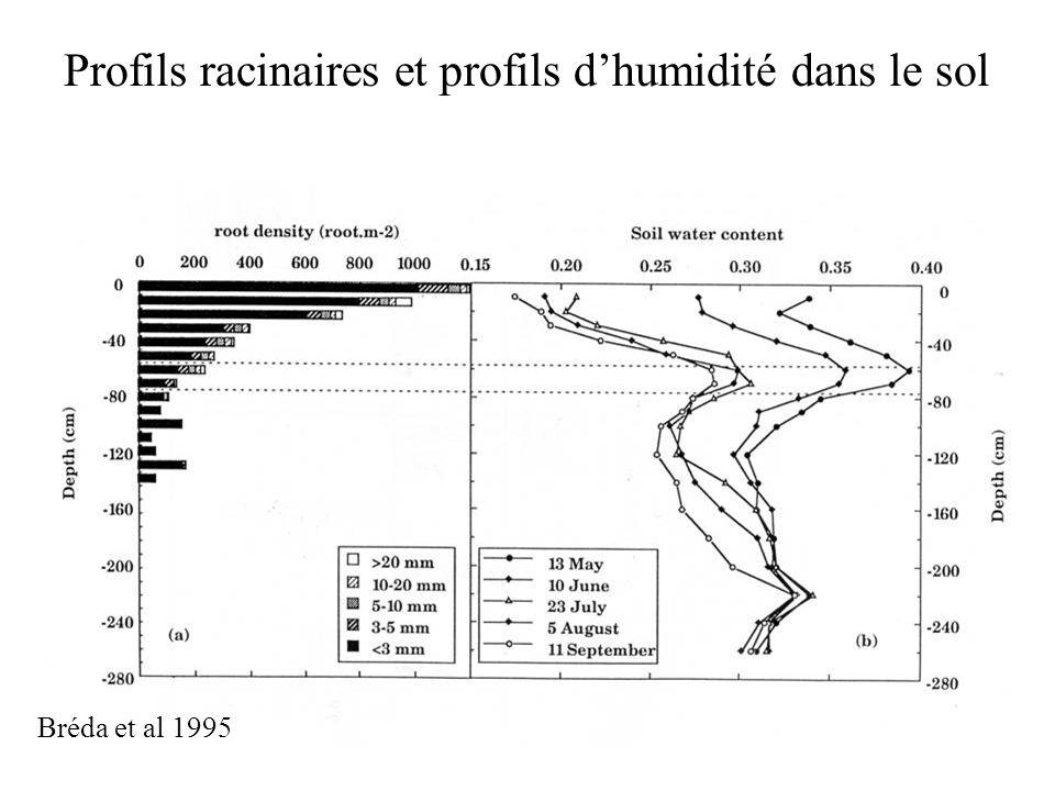 Profils racinaires et profils d'humidité dans le sol