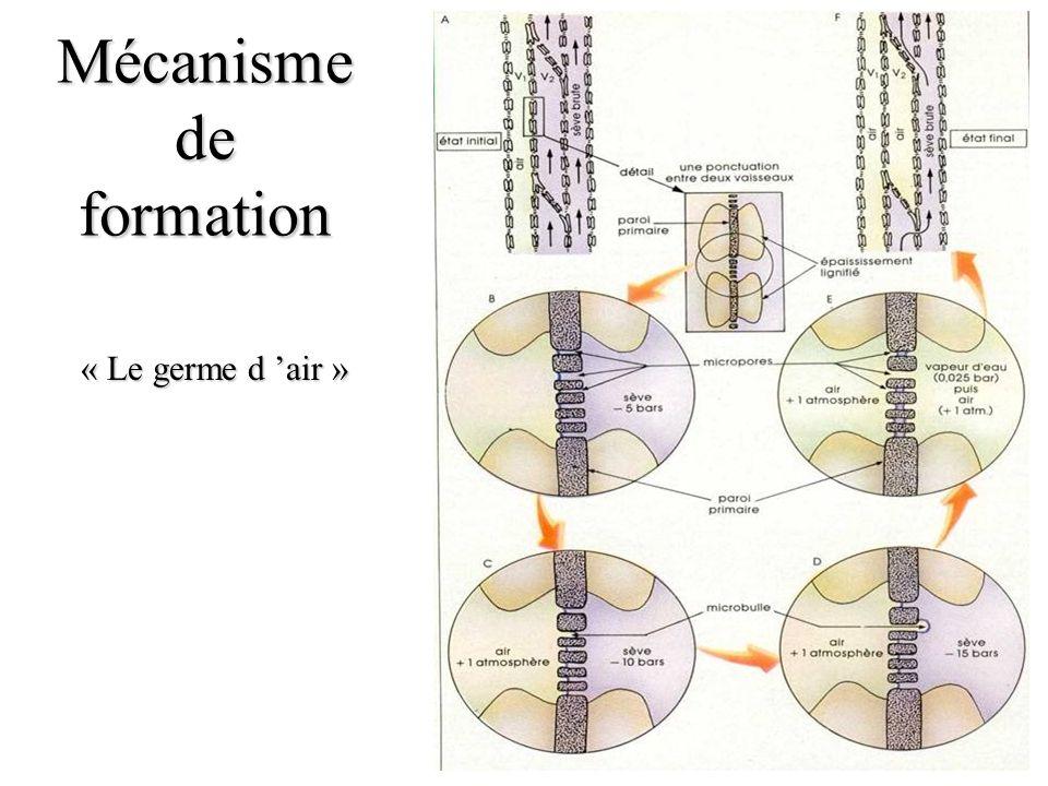 Mécanisme de formation