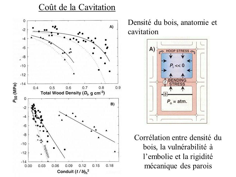 Coût de la Cavitation Densité du bois, anatomie et cavitation
