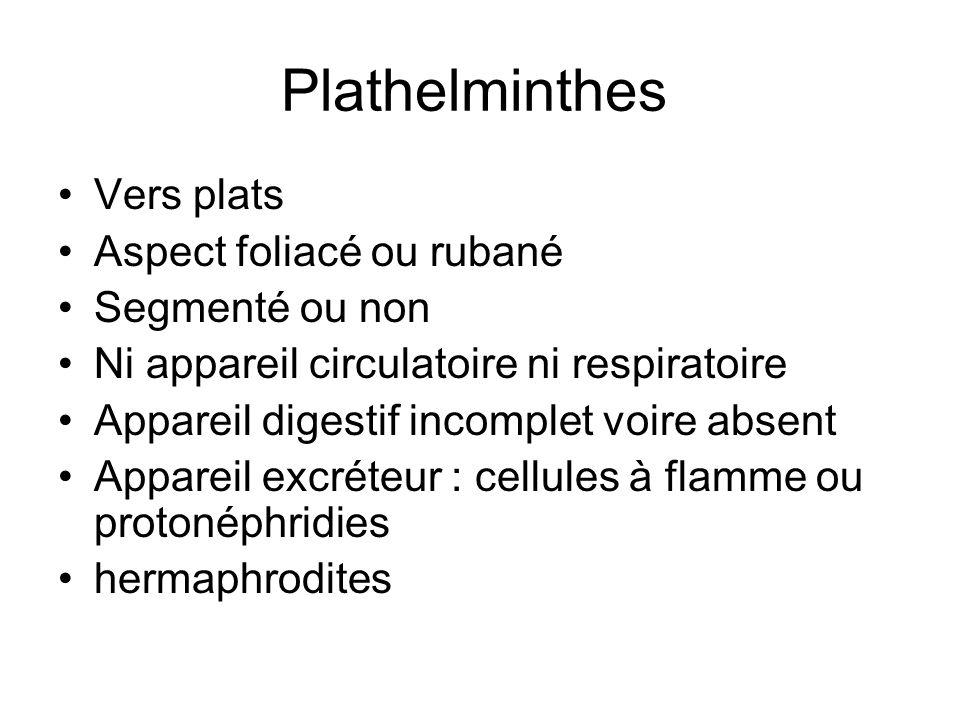 Plathelminthes Vers plats Aspect foliacé ou rubané Segmenté ou non