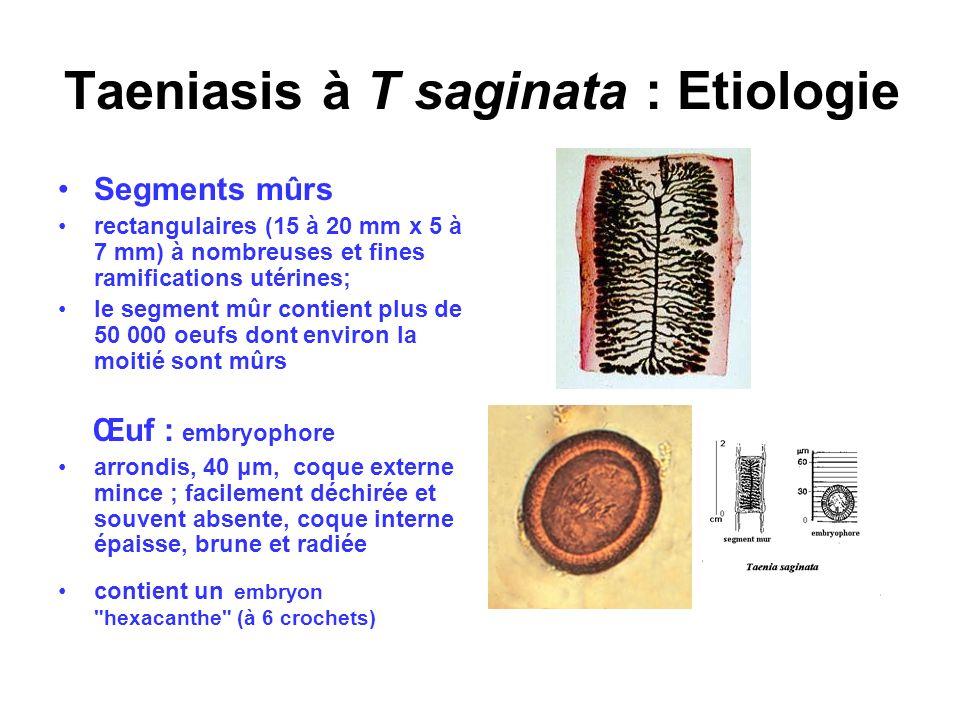 Taeniasis à T saginata : Etiologie