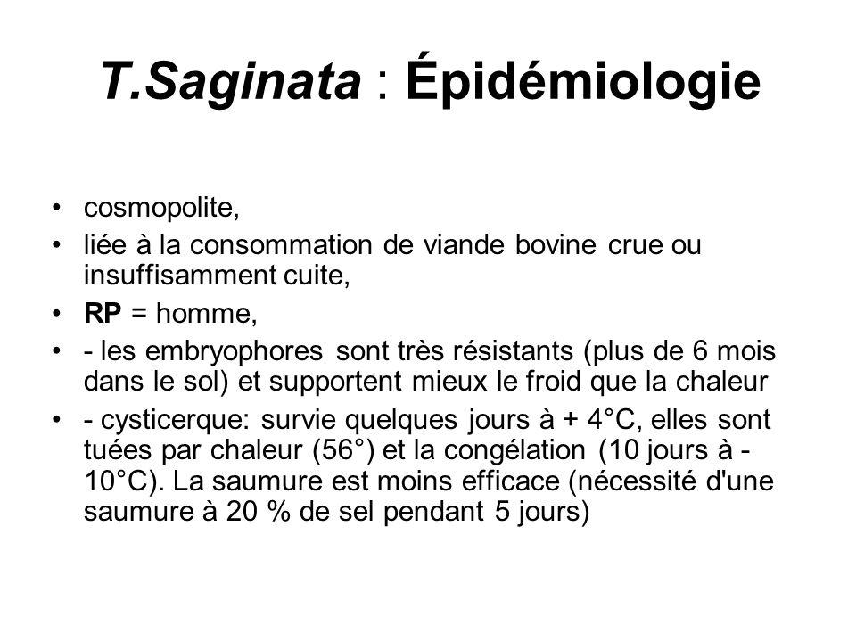 T.Saginata : Épidémiologie