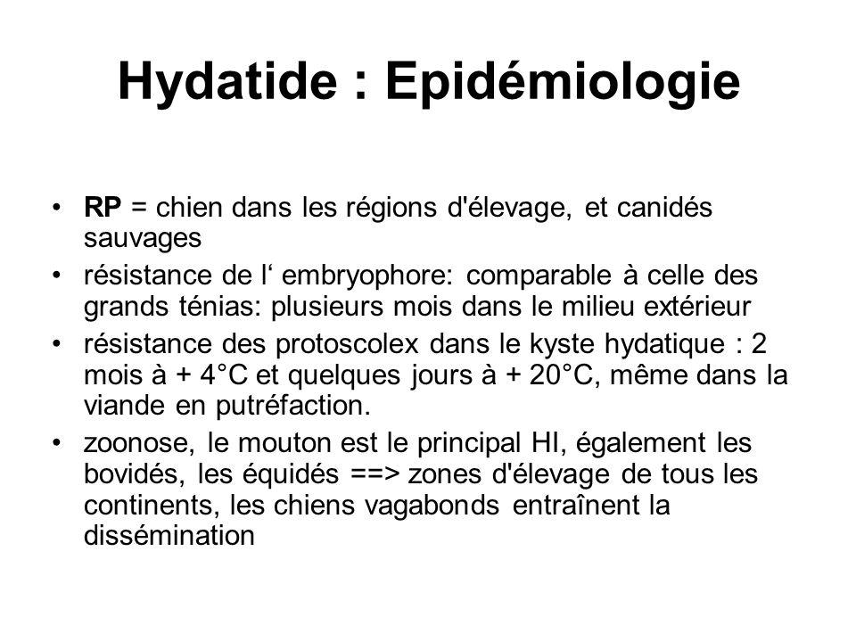Hydatide : Epidémiologie