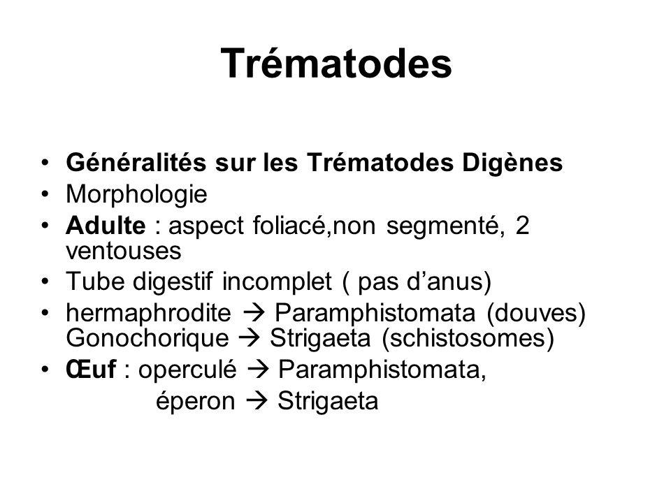 Trématodes Généralités sur les Trématodes Digènes Morphologie