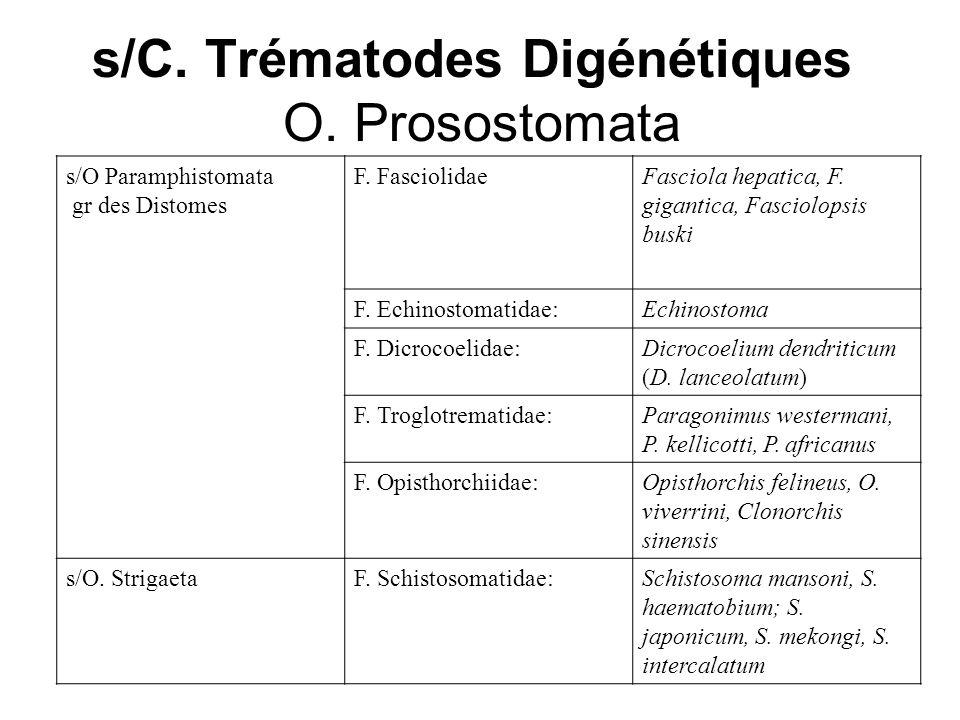 s/C. Trématodes Digénétiques O. Prosostomata