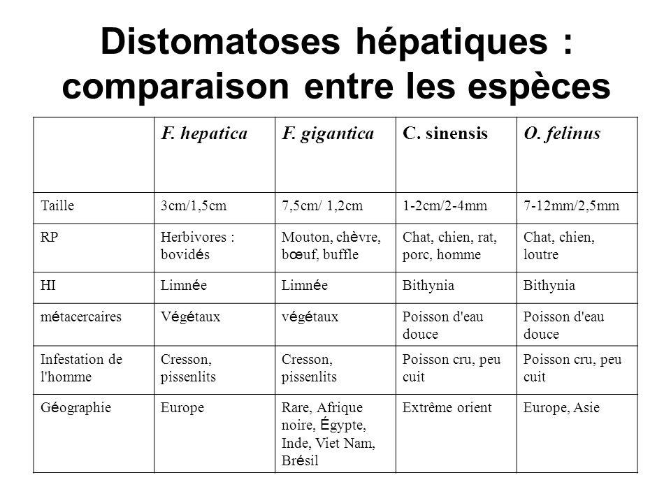 Distomatoses hépatiques : comparaison entre les espèces