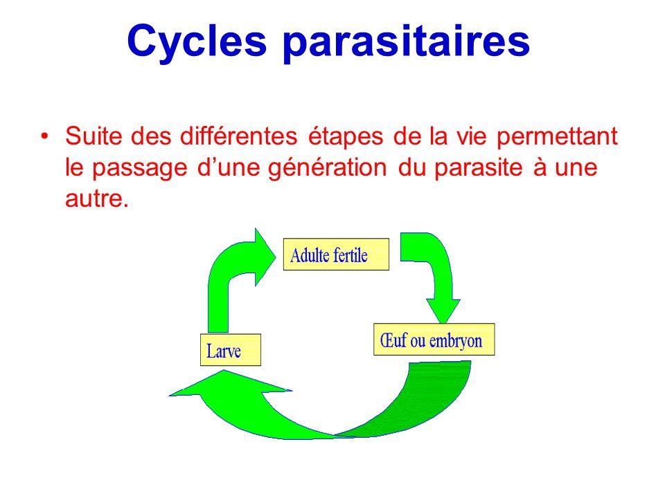 Cycles parasitaires Suite des différentes étapes de la vie permettant le passage d'une génération du parasite à une autre.