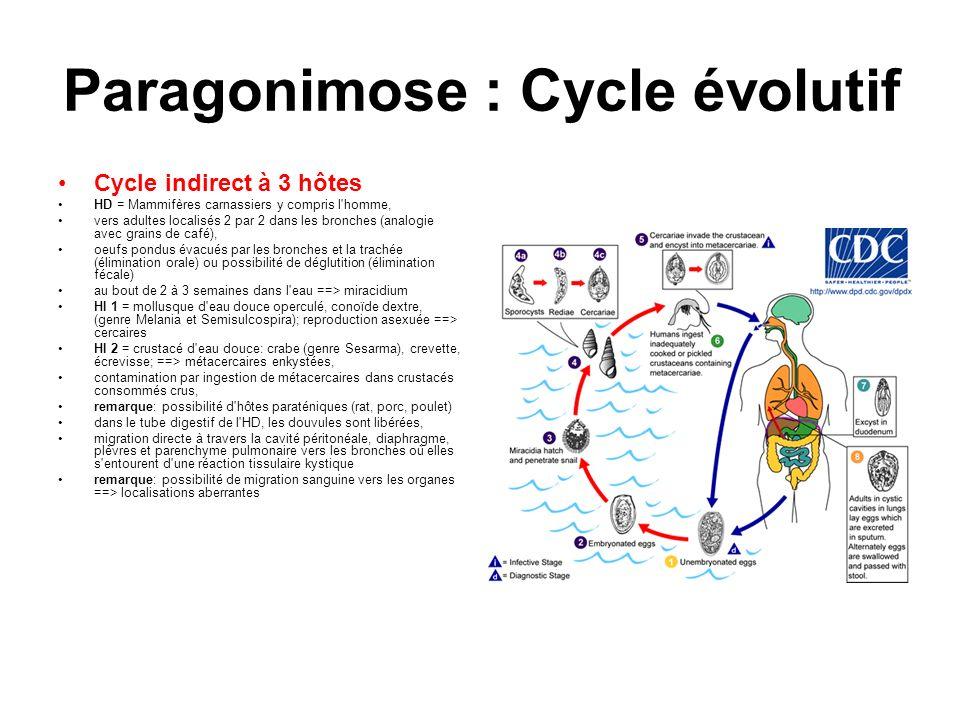 Paragonimose : Cycle évolutif