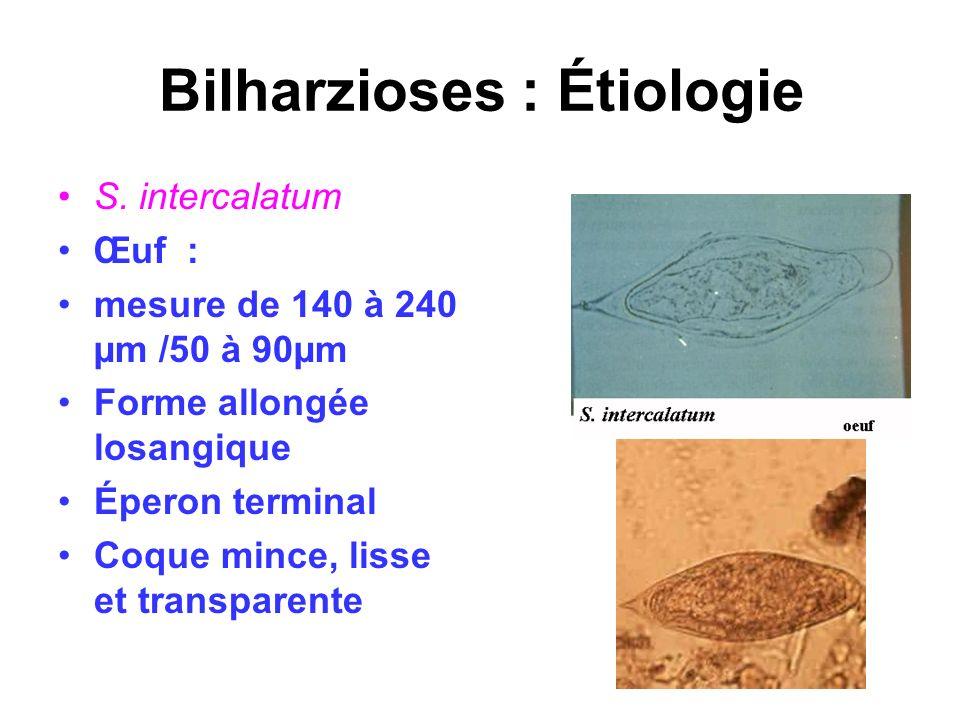 Bilharzioses : Étiologie