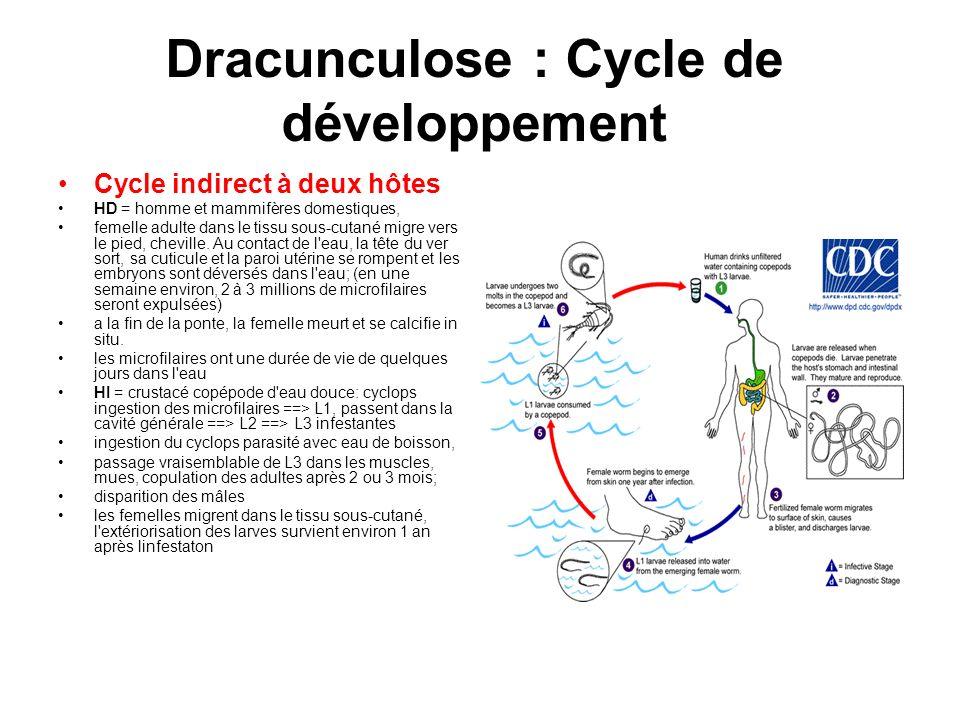 Dracunculose : Cycle de développement