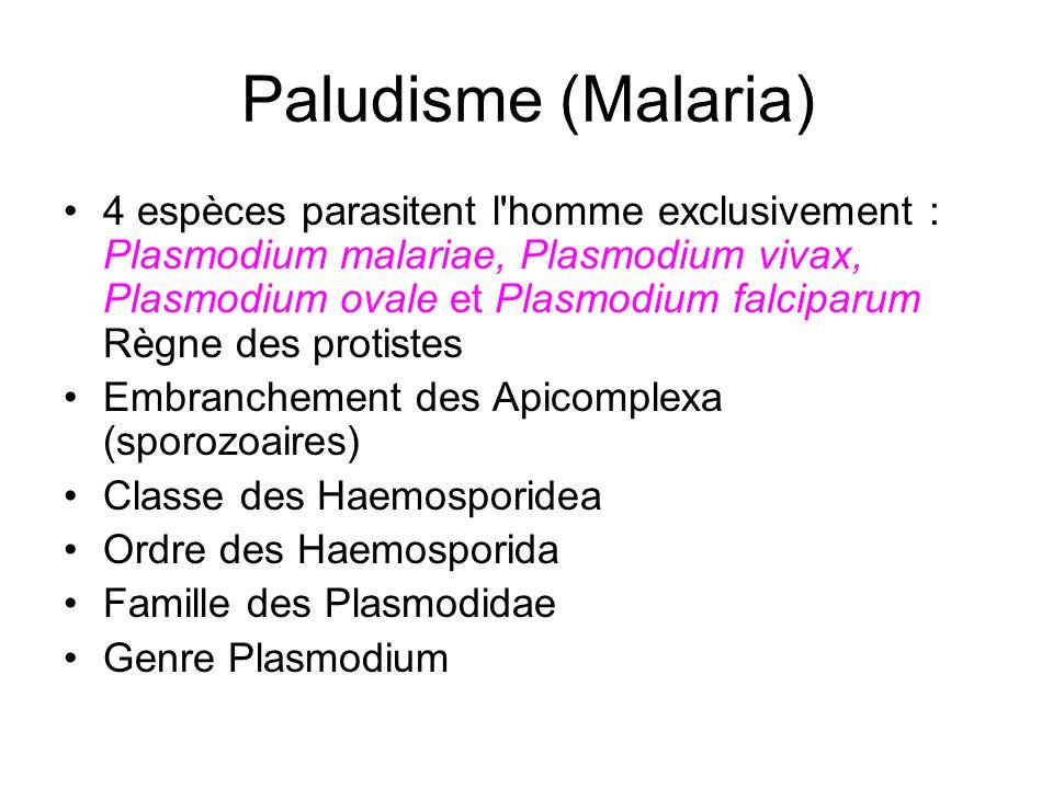 Paludisme (Malaria)