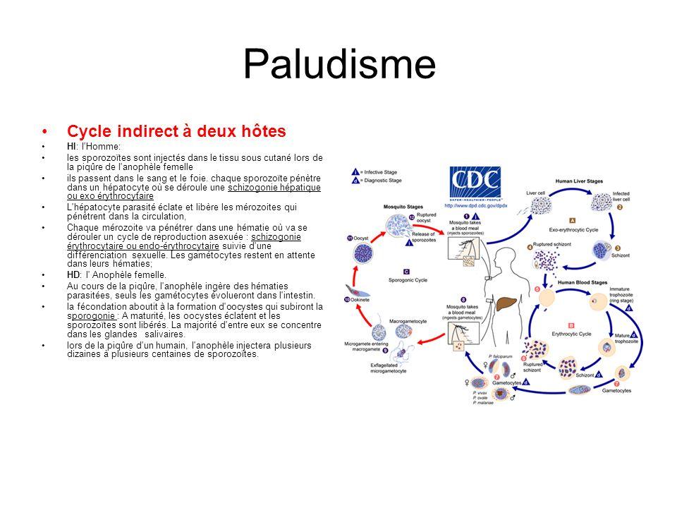 Paludisme Cycle indirect à deux hôtes HI: l Homme: