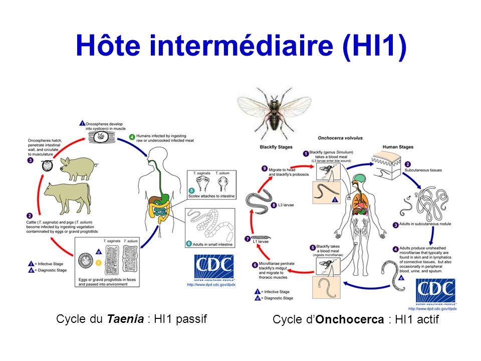 Hôte intermédiaire (HI1)