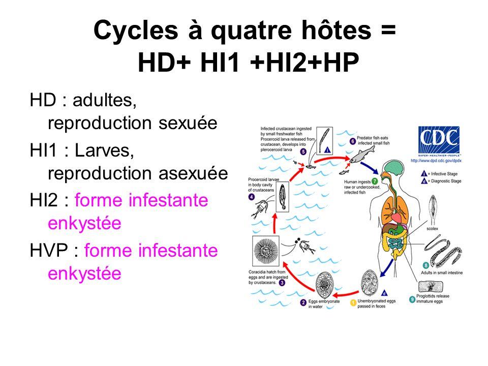 Cycles à quatre hôtes = HD+ HI1 +HI2+HP