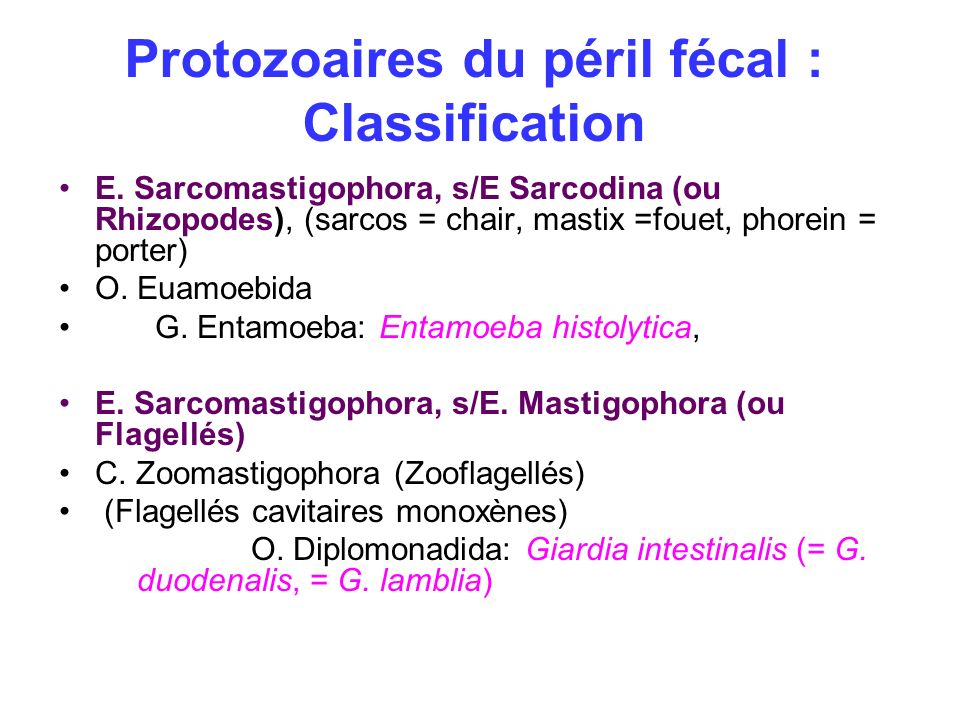 Protozoaires du péril fécal : Classification
