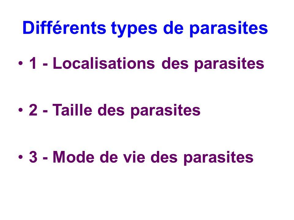 Différents types de parasites