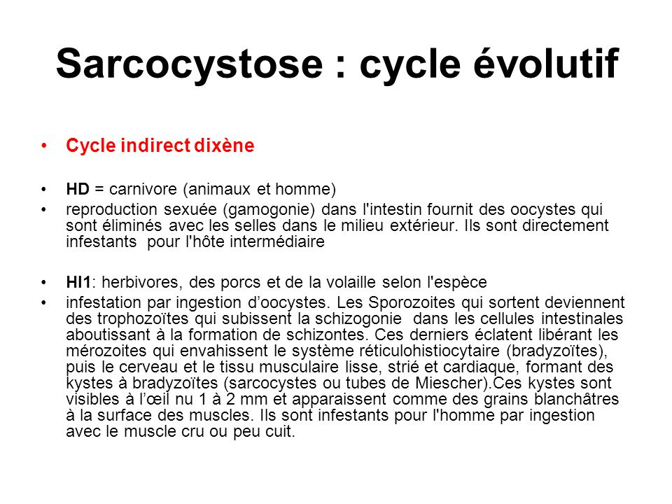 Sarcocystose : cycle évolutif