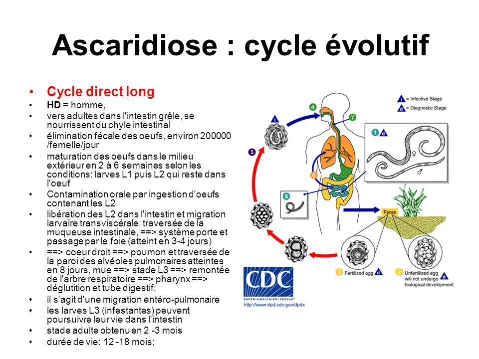 Ascaridiose : cycle évolutif