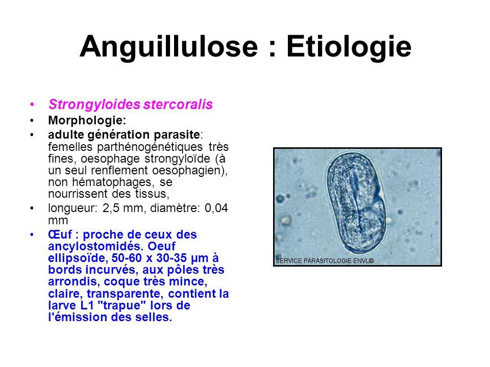Anguillulose : Etiologie