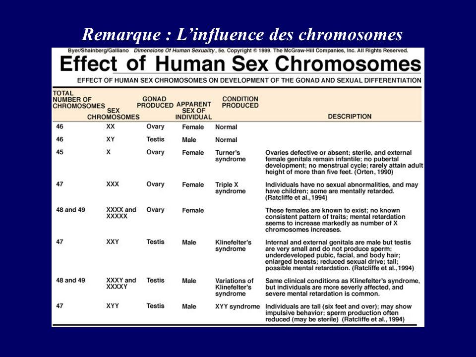 Remarque : L'influence des chromosomes