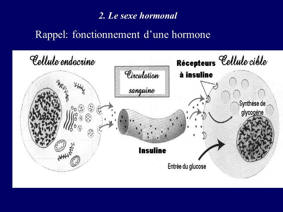 Rappel: fonctionnement d'une hormone