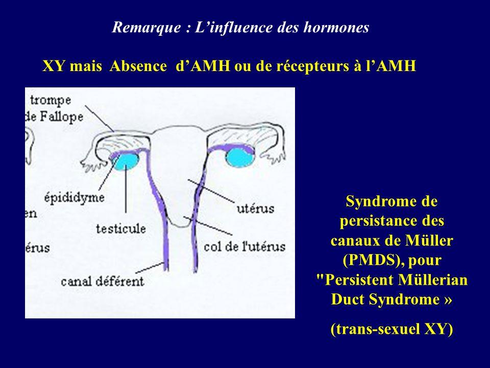 Remarque : L'influence des hormones