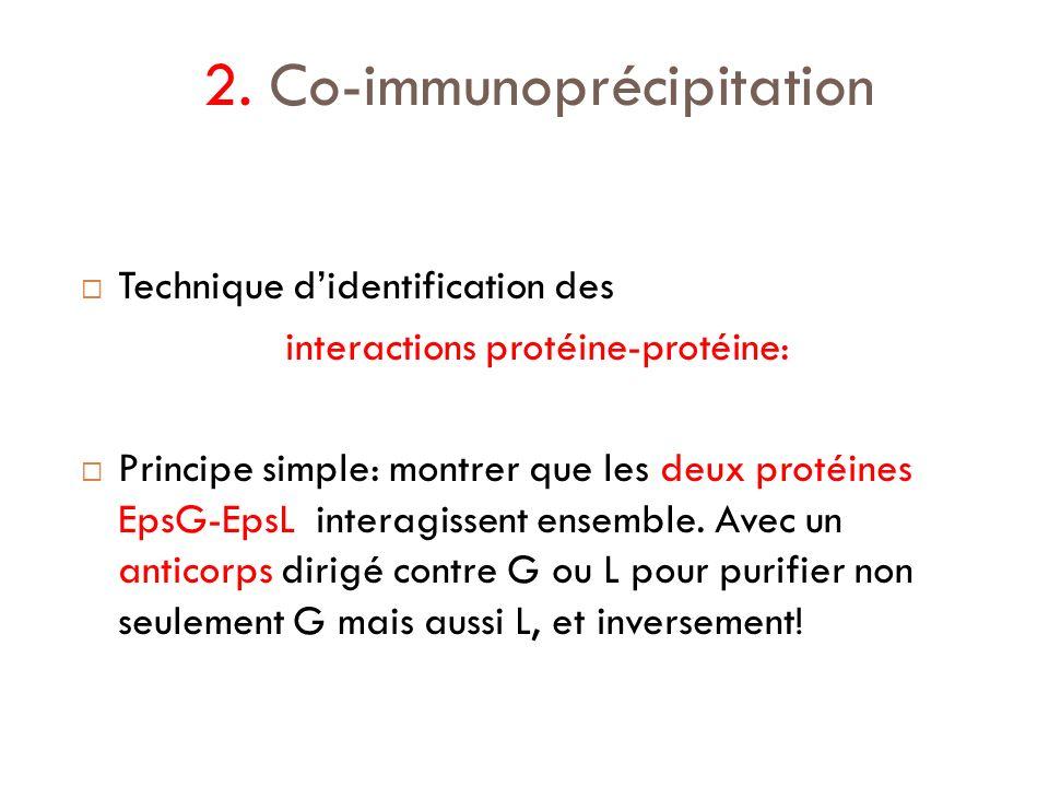 2. Co-immunoprécipitation
