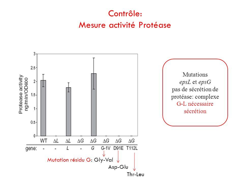 Mesure activité Protéase