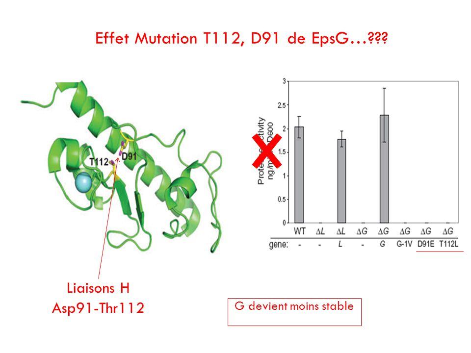 Effet Mutation T112, D91 de EpsG…