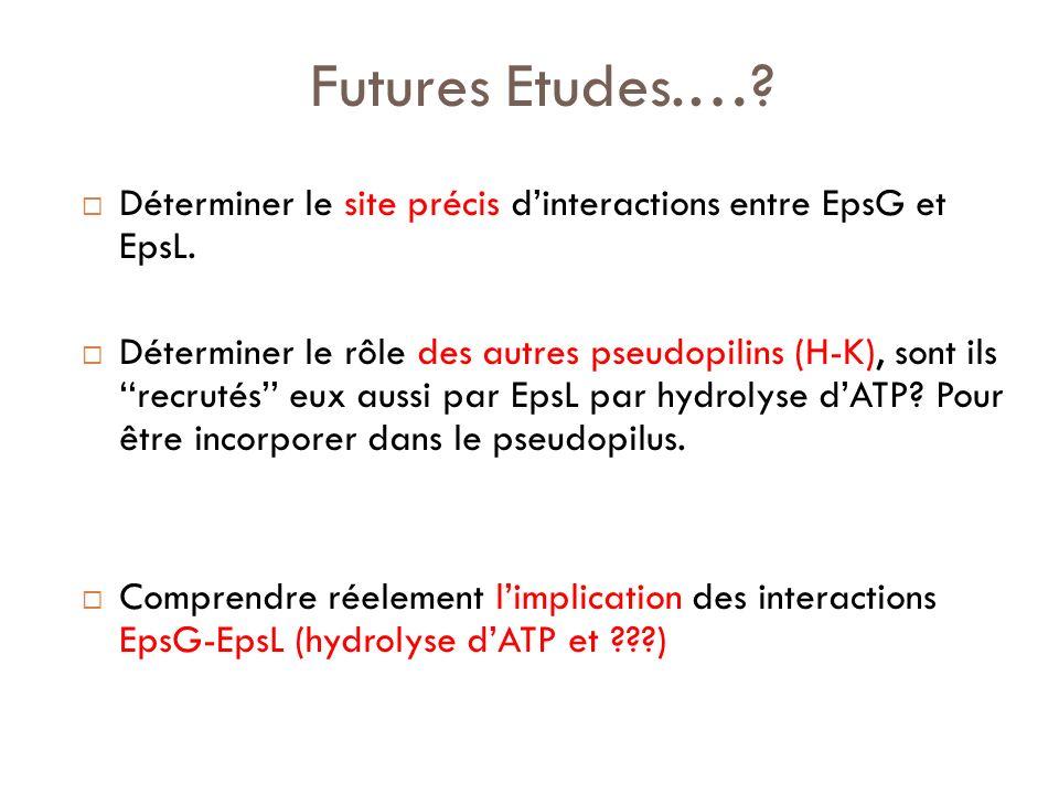 Futures Etudes.… Déterminer le site précis d'interactions entre EpsG et EpsL.