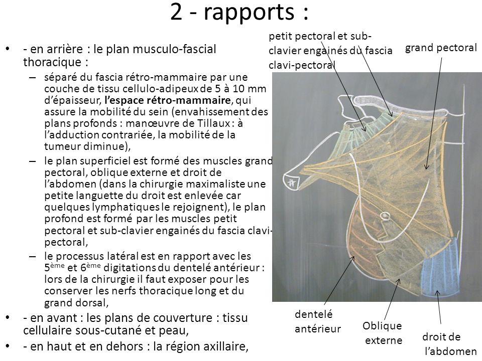 2 - rapports : - en arrière : le plan musculo-fascial thoracique :