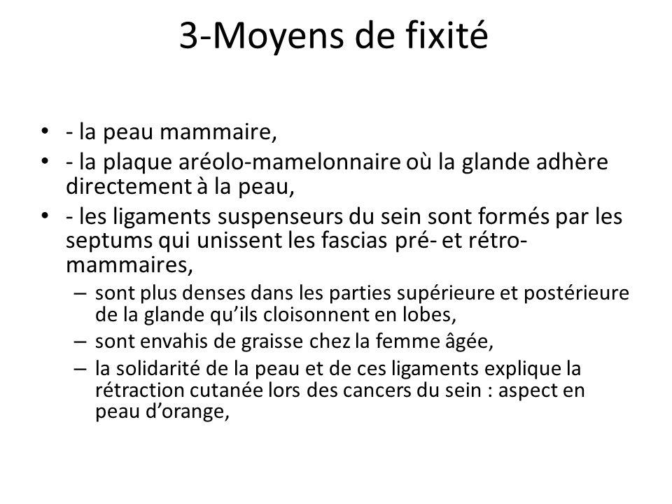 3-Moyens de fixité - la peau mammaire,