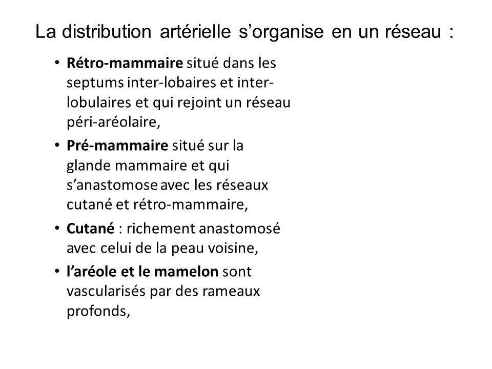 La distribution artérielle s'organise en un réseau :