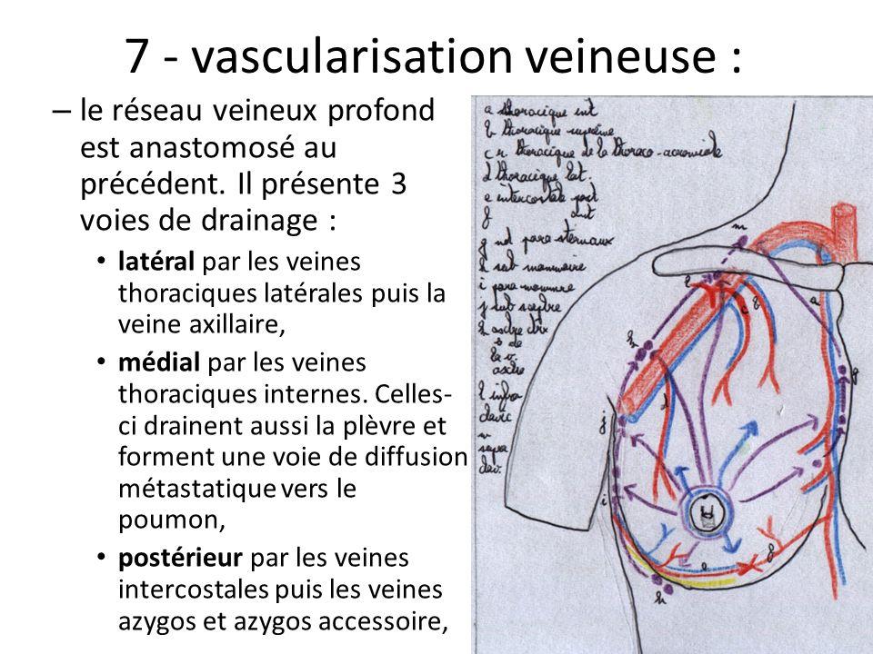 7 - vascularisation veineuse :