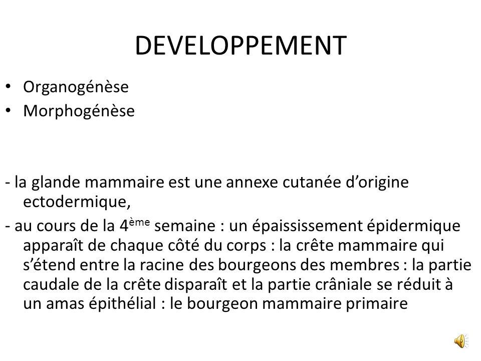 DEVELOPPEMENT Organogénèse Morphogénèse