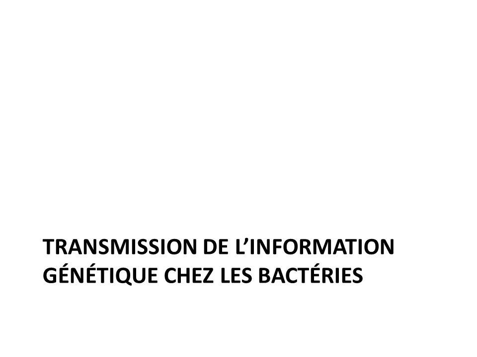 Transmission de l'information génétique chez les bactéries