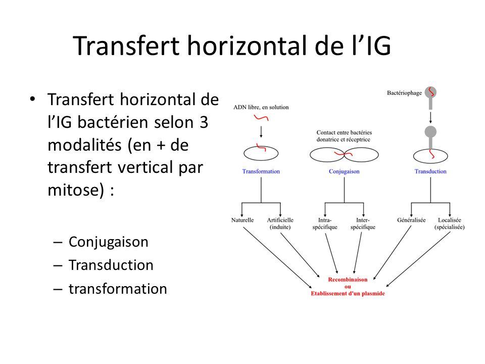 Transfert horizontal de l'IG