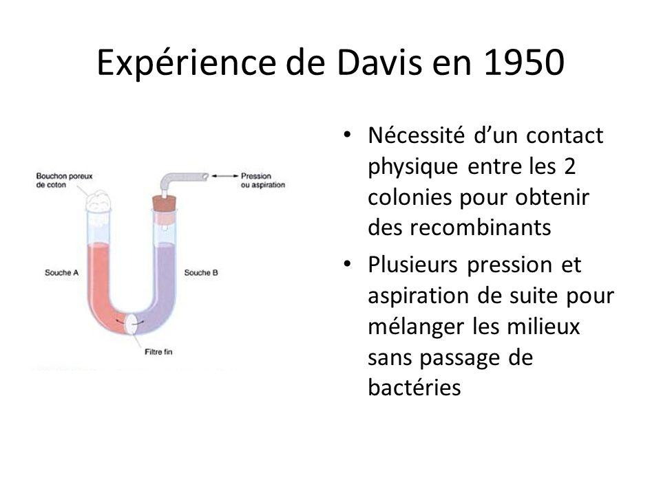 Expérience de Davis en 1950 Nécessité d'un contact physique entre les 2 colonies pour obtenir des recombinants.