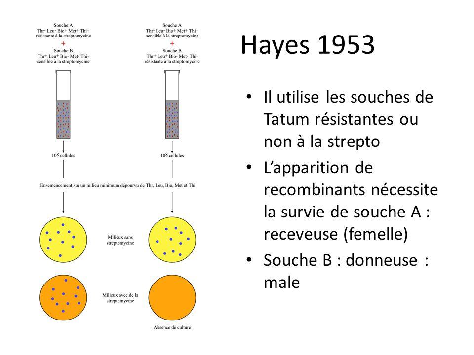 Hayes 1953 Il utilise les souches de Tatum résistantes ou non à la strepto.